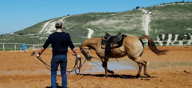 טיפול בסוסים